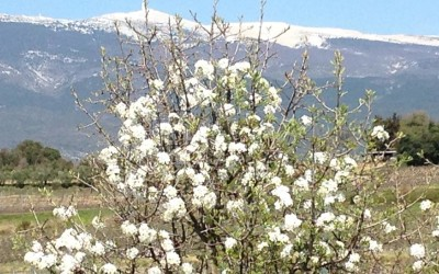 APRIL in PROVENCE – Check out the blossom!