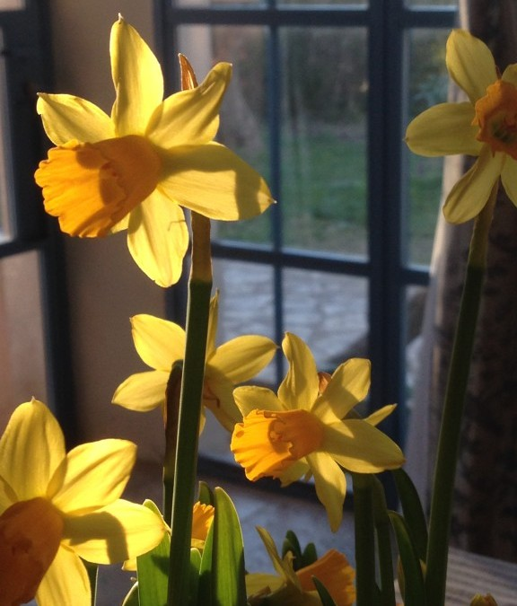 MARCH in PROVENCE – Spring is in the air!